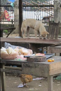 Dog helps himself to table scraps in Bac Kan, Vietnam